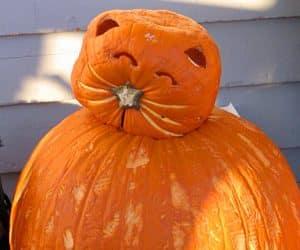 bostan de halloween - model de pisica cu cap