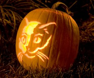 bostan de halloween cu pisica in doua culori