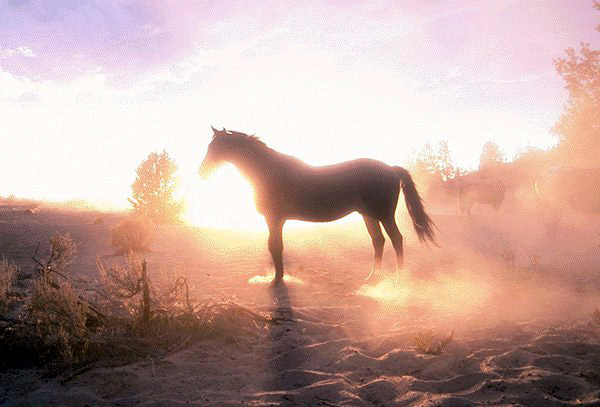 calul-mitologie-la-romani