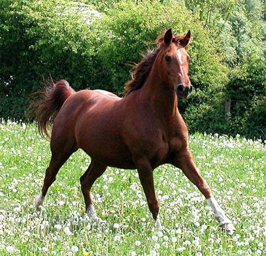 calul-din-vis