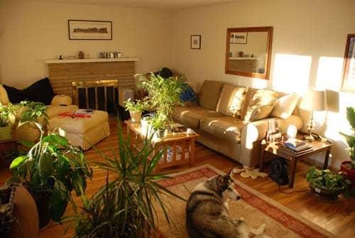 Plantele de apartament: Redaţi-le strălucirea! 2