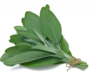 Imaginea thumbnail despre Afla beneficiile consumului regulat de ceai de salvie