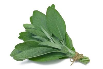 salvia - consuma ceaiul de salvie pentru a beneficia de proprietatile acestei plante