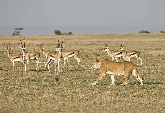 leul-si-gazelele