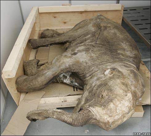 puiul-de-mamut