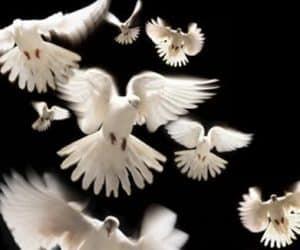imagini cu porumbei