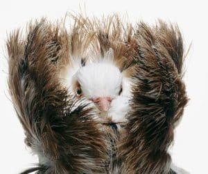 Busola porumbei voiajori - simţul mirosului! 8
