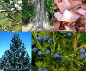 lemnul-de-cedru si fructe