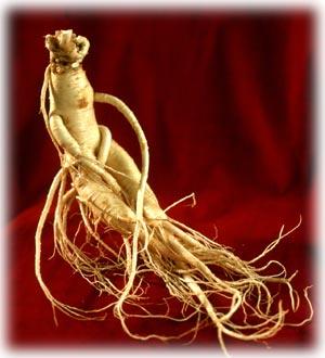 radacina de ginseng - beneficii pentru sanatate Panax-Ginseng