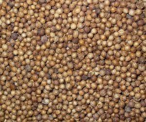 seminte-de-coriandru