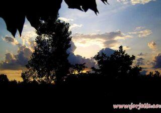 apus-de-soare-din-copac