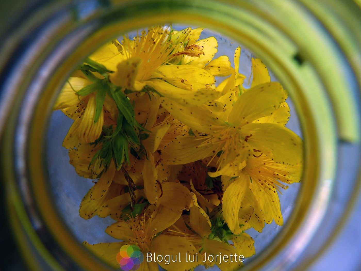 Flori de sunatoare