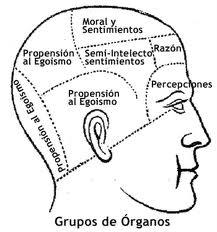 Ce reprezintă frenologia? 1