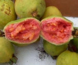 fructul de guava copt bine - rosu - proaspat