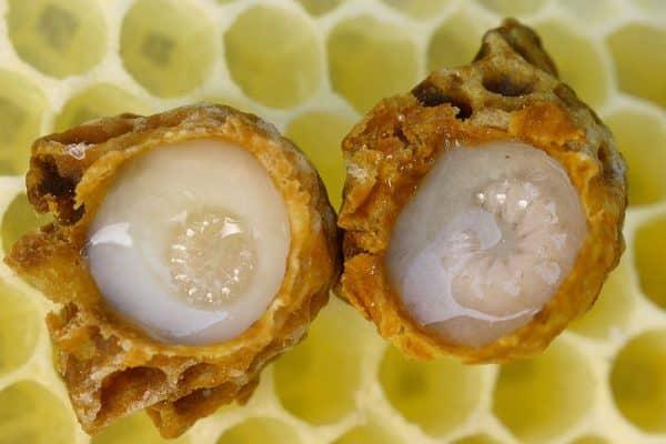 apilarnil - extras din larvele de trantori