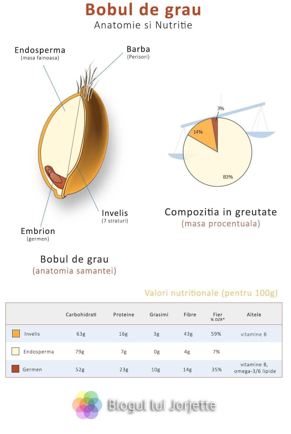 Bobul de grau din care se face grisul si faina de grau - Anatomie si valori nutritionale