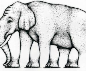 Galerie Iluzii optice - Elefantul cu mai multe picioare