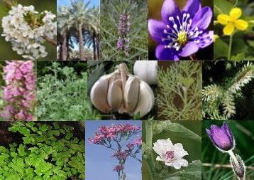 Cele mai bune remedii pentru fitofarmacia de acasa 1