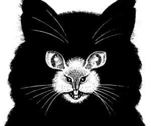 Galerie Iluzii optice - Pisica cu bot de soarece