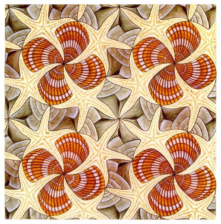 Galerie Iluzii optice - Scoici si stele de mare