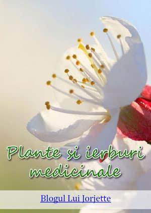 Cartea 101 Plante si Ierburi medicinale cu leac