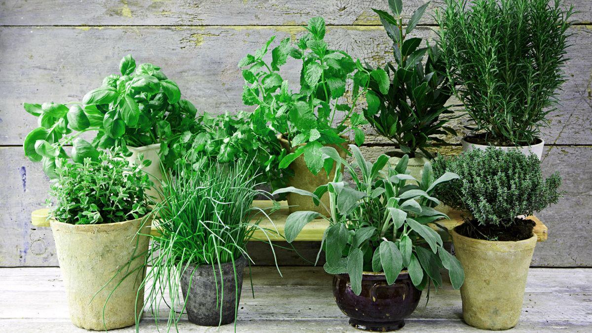 Ghivece cu plante aromatice si condimentare