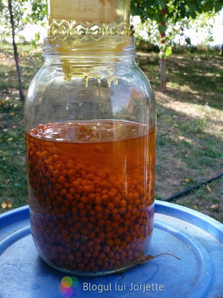 Sirop de catina cu miere de albine