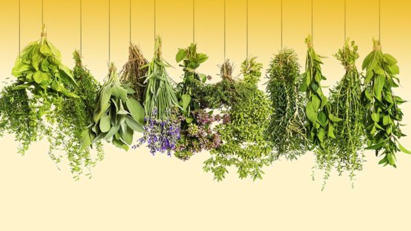 Colectarea si conservarea plantelor medicinale