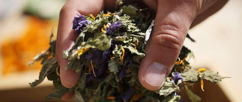 plante medicinale pentru uz extern
