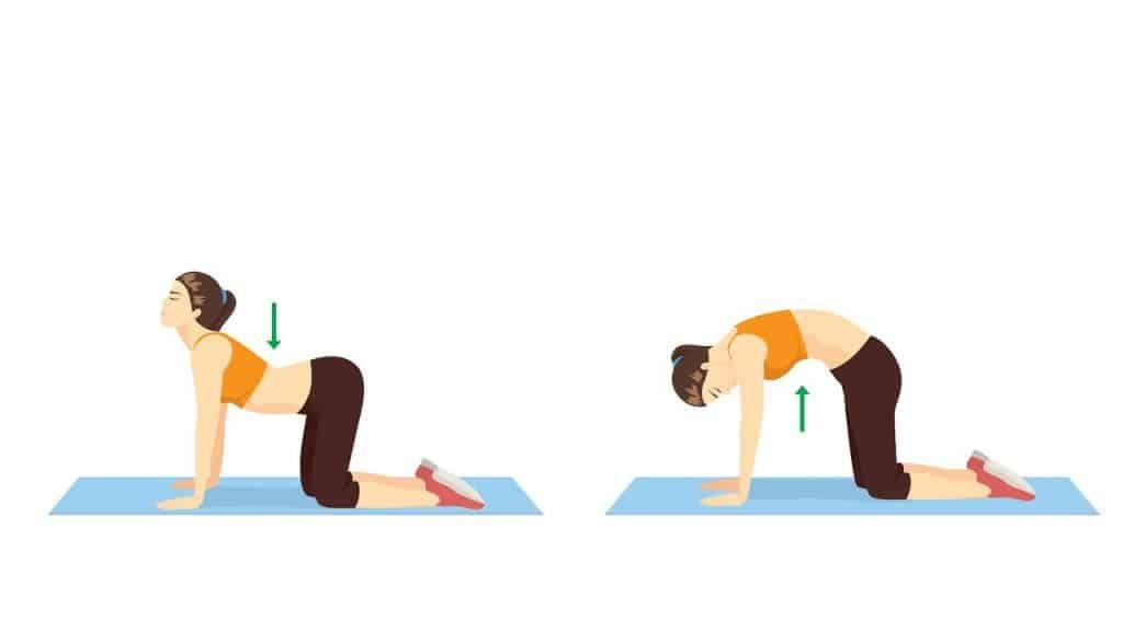 Exercitii yoga postura pisicii sau a vacii