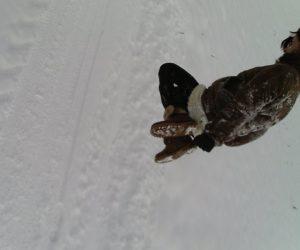 Fotografii de iarna - Prima săritură