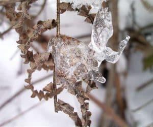 Fotografii de iarna marca Blogul Lui Jorjette 2