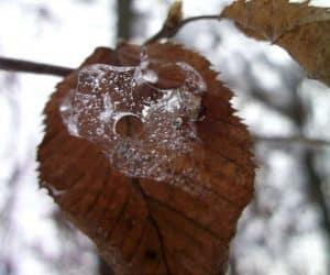 Fotografii de iarna marca Blogul Lui Jorjette 5