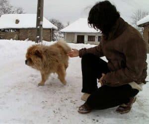 Fotografii de iarna - Cainele primarului