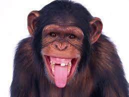 Curiozitati dentare din lumea animalelor 1