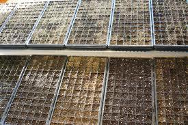 producerea rasadurilor