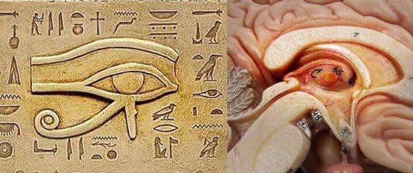 Ochiul lui Horus in relatie cu glanda pineala