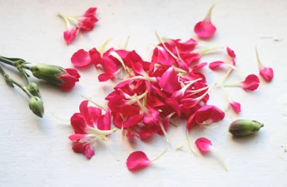 petalele de garoafa beneficii pentru sanatate