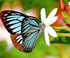 poze cu fluturi - fluturele simbol al transformarii