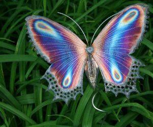 poze cu fluturi - Fluturele curcubeu