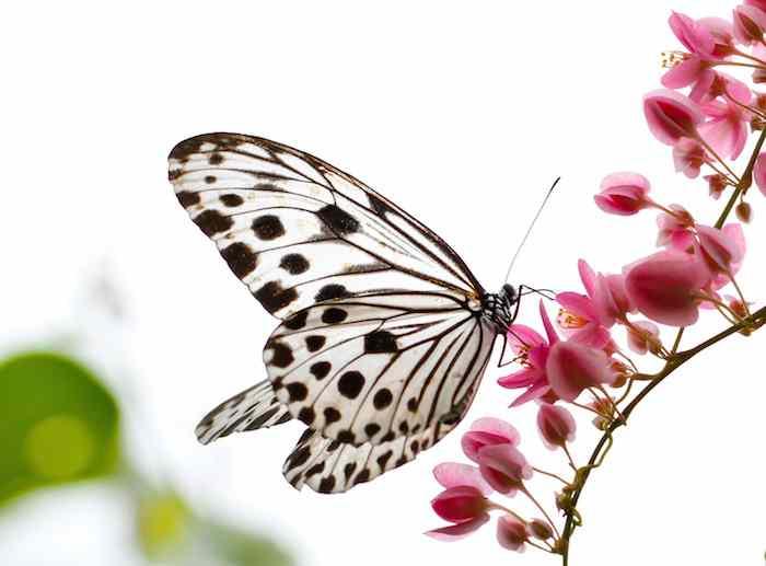 poze cu fluturi si flori