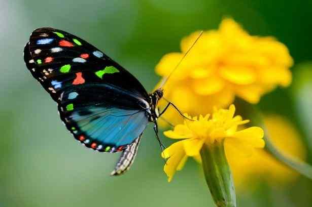 poze cu fluturi - Fluturele simbol al evolutiei spirituale