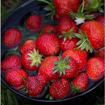 capsune fructe alimente bogate in fier