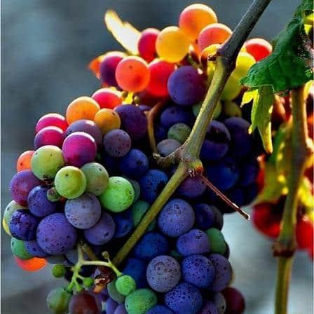 struguri fructe bogate in fier