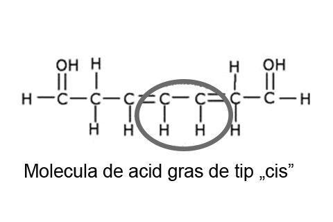 Molecula de acid gras de tip cis