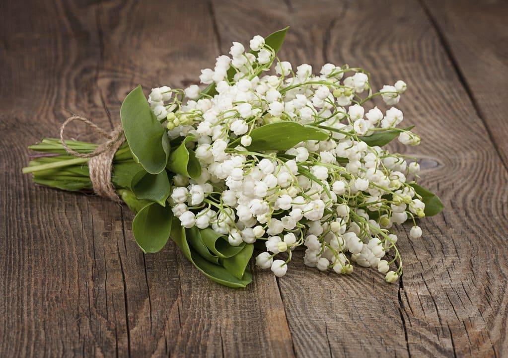 lacramioarele – flori cu parfum minunat