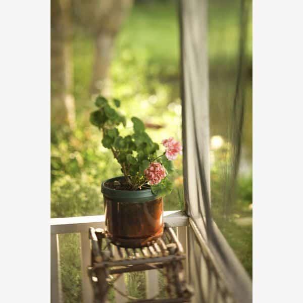 muscate geranium