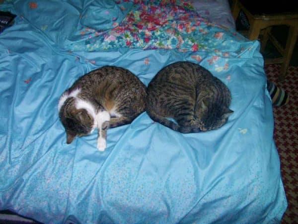 Armonia - pisici de la tara - Rin si Rita dorm in armonie