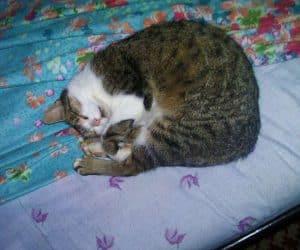 Rita doarme