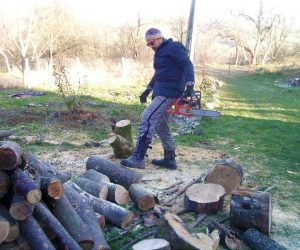 Bogdan taie lemne